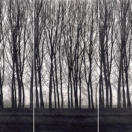 Linha Bosque